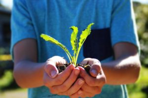 Community Gardens by Jarrah Hatchett. People / Places - Youth