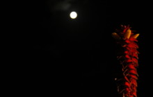 Magic Mullumbimby Moon by Mannan Wilkinson. Streetscape / Landscapes – Youth